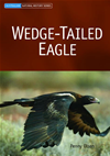 Wedge-Tailed Eagle: