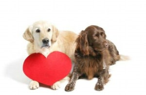 Dog Heart Murmur: Causes, Symptoms and Treatments