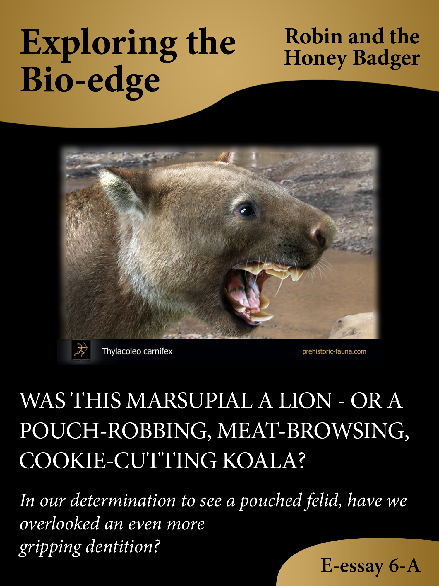 robin and the honey badger was this marsupial a lion or a pouch was this marsupial a lion or a pouch robbing meat browsing cookie cutting koala author robin and the honey badger