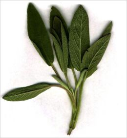 A Crash Course on How to Grow Sage