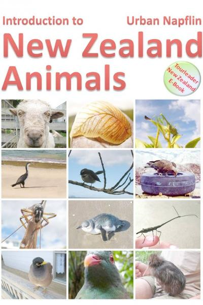 Introduction to New Zealand animals By: Urban Napflin
