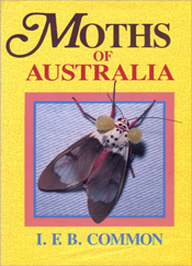 Moths of Australia By: Ifb Common