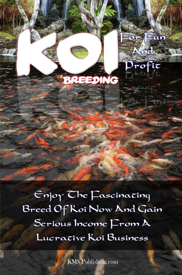 Koi Breeding For Fun And Profit