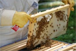 A Beginners Guide To Beekeeping: Everything You Need To Know To Become A Successful Beekeeper