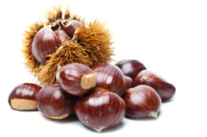 How to Grow Chestnuts