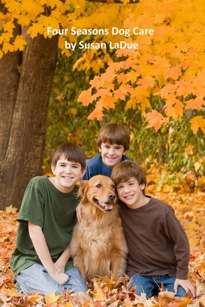 Four Seasons Dog Care: What Dog Owners Should Do as the Seasons Change